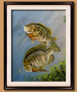 Blue Gills Color Art for Sale By Wisconsin Wildlife Artist Jim Tostrud