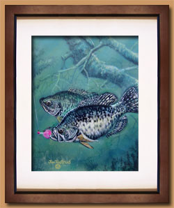 Crappies Color Art for Sale By Wisconsin Wildlife Artist Jim Tostrud