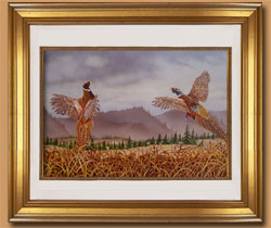 Flushing Pheasants Color Art for Sale By Wisconsin Wildlife Artist Jim Tostrud