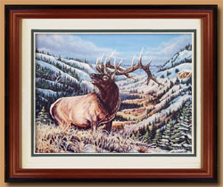 Rocky Mountain Elk  Color Art for Sale By Wisconsin Wildlife Artist Jim Tostrud