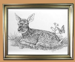 A New Beginning Unique Black and WHite Pencil art for Sale By Wisconsin Wildlife Artist Jim Tostrud