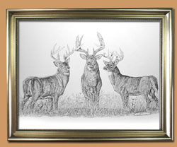 Bad Boyz Unique Black and WHite Pencil art for Sale By Wisconsin Wildlife Artist Jim Tostrud