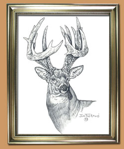 Canadian King Unique Black and WHite Pencil art for Sale By Wisconsin Wildlife Artist Jim Tostrud