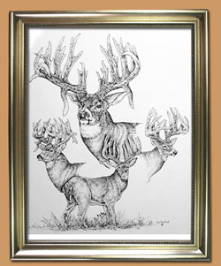 Unique Black and WHite Pencil art for Sale By Wisconsin Wildlife Artist Jim Tostrud