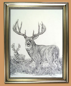 Illinois Road Kill Buck Unique Black and WHite Pencil art for Sale By Wisconsin Wildlife Artist Jim Tostrud
