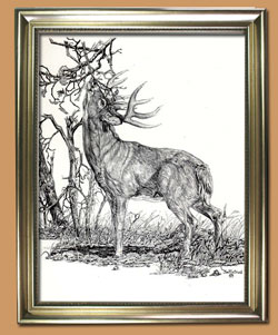 Leaving A Calling Card  Unique Black and WHite Pencil art for Sale By Wisconsin Wildlife Artist Jim Tostrud