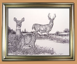 The Back Forty Unique Black and WHite Pencil art for Sale By Wisconsin Wildlife Artist Jim Tostrud