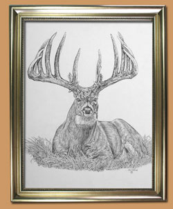 The Restful King  Unique Black and WHite Pencil art for Sale By Wisconsin Wildlife Artist Jim Tostrud