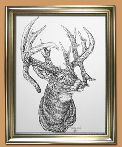 Watchful Eye Unique Black and WHite Pencil art for Sale By Wisconsin Wildlife Artist Jim Tostrud