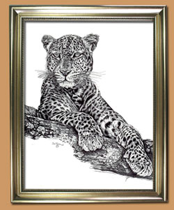 Who Spotted Who Unique Black and WHite Pencil art for Sale By Wisconsin Wildlife Artist Jim Tostrud