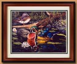 Wood Ducks Color Art for Sale By Wisconsin Wildlife Artist Jim Tostrud